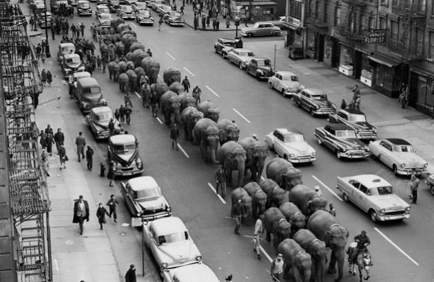 فیل، نیویورک و گوگل چه وجه اشتراکی دارند؟