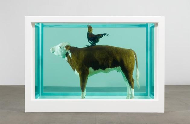 گاو و خروس، اثر: دیمین هرست.